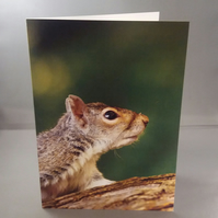 Squirrel up a Tree Greetings Card
