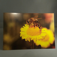 Bee on a Flower Greetings Card