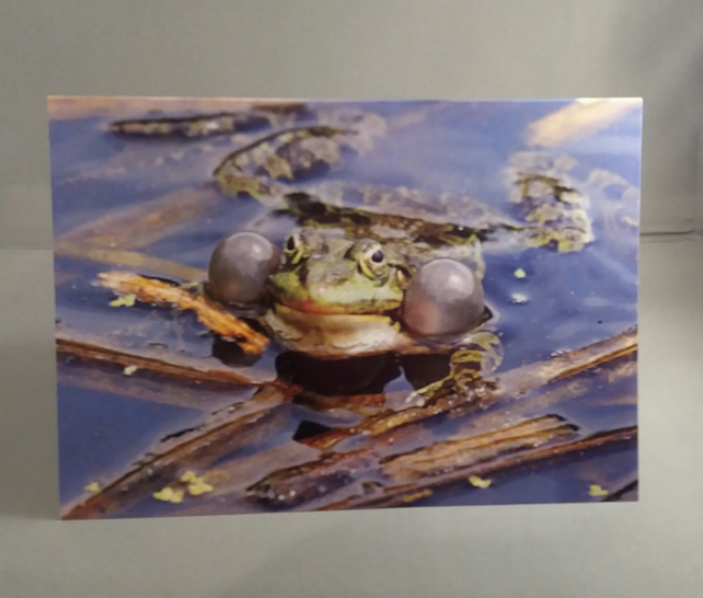 Frog's Mating Call Greetings Card
