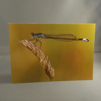 Damselfly Greetings Card
