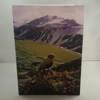 Kea in New Zealand  Greetings Card