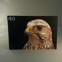 40th Birthday Card. Falcon.