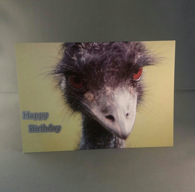 Emu's Bad Hair Day! Happy Birthday.