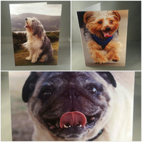 Set of 3 dog greetings cards. Blank inside.