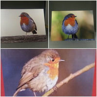 Robin Greetings Cards set of 3