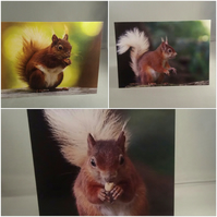 Set of 3 Red Squirrel Greeting Cards