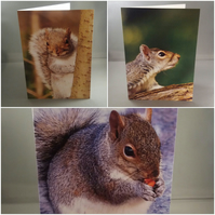 Set of 3 Grey  Squirrel Greeting Cards, blank inside