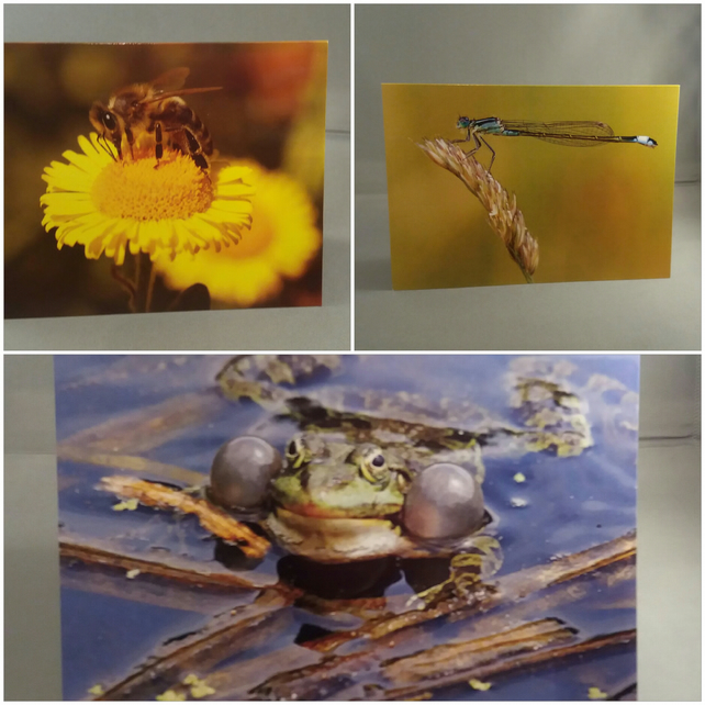 Set of 3 Wildlife Greeting Cards.. Frog, Damselfly and Bee