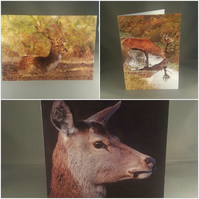 Set of 3 Deer Greeting Cards