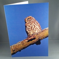Little Owl Greeting Card. Factual Greeting Card. Blank Inside. any Occasion.
