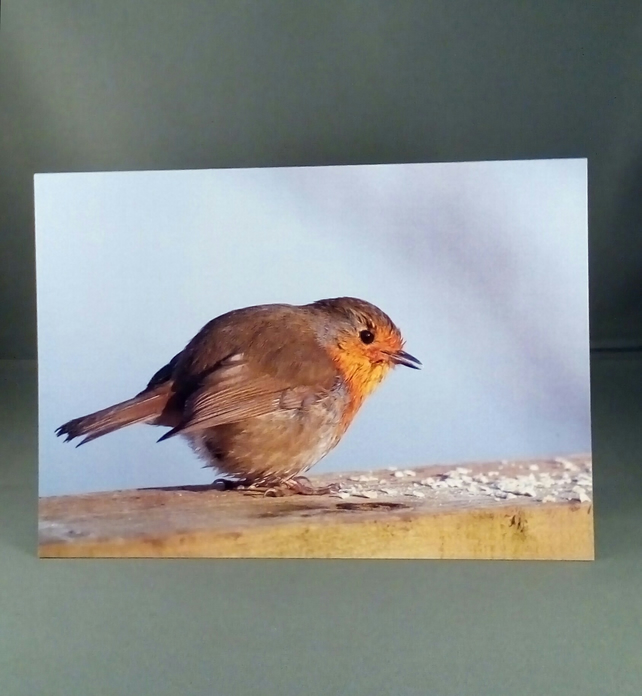 Robin Greeting Card. Educational Version.
