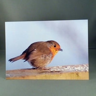 Robin Greeting Card. Blank inside. Factual Greeting Card. Any occasion.