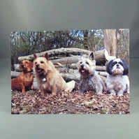 Dogs in the wood greeting card. Shih Tzu, Terriers and a Sausage Dog.