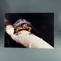 Terrapin Greeting Card. Factual Greeting Card. Any Occasion. Blank Inside