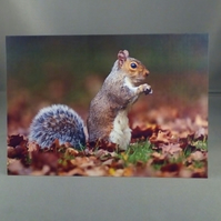 Squirrel in the Autumn leaves. Factual card. Any occasion. Blank inside