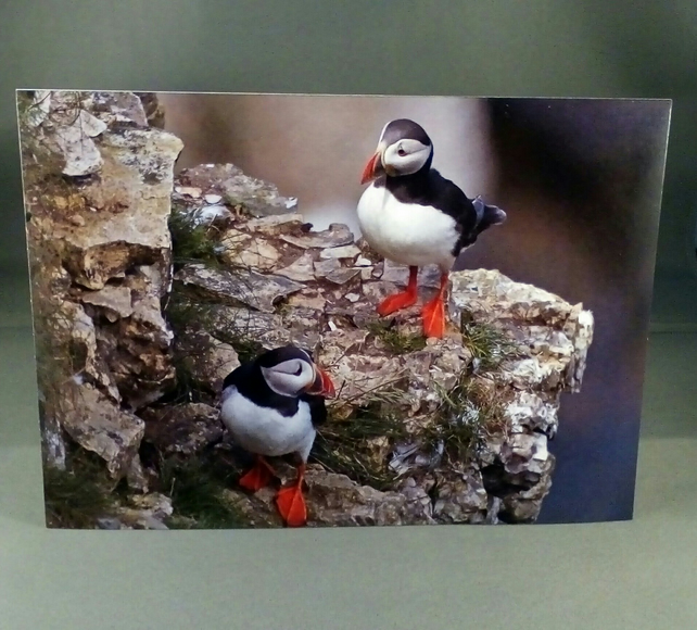 Puffins Birthday Card Blank Inside Factual G