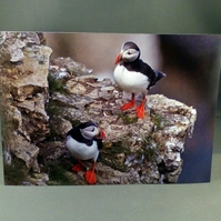 Puffins birthday Card.  Blank inside. Factual Greeting Card. Any occasion.