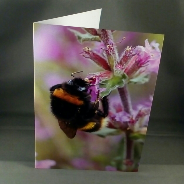 Bumble Bee Card.  Blank inside. Factual Greeting Card.