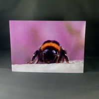 Bumble Bee Portrait Card.  Blank inside. Factual Greeting Card.