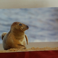 Grey Seal Greeting Card. Wildlife photography. Blank inside.