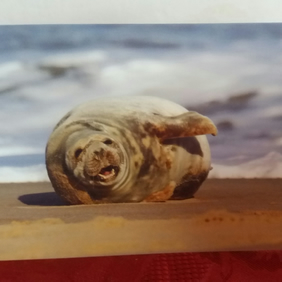 Seal on the beach. Greeting Card.  Blank inside. Any occasion card.