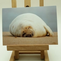 Sleepy Grey Seal Greetings Card. Factual Card.