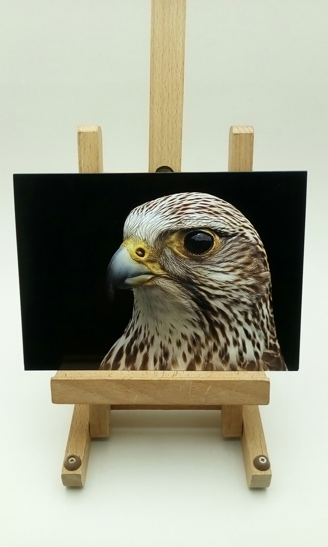 Gyrfalcon Greetings Card. Blank inside. Wildlife card.