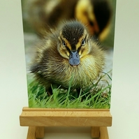 Little Duckling Greetings Card. Blank inside.