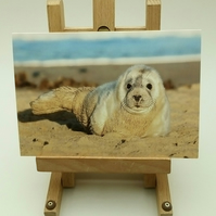 Grey Seal Greetings Card. Baby Grey Seal. Seal Facts Card.
