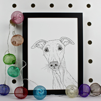 Whippet Dog Portrait Print