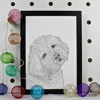 Cockapoo Dog Portrait Print