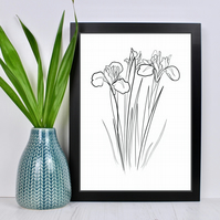 Iris Flower Line Drawing Print