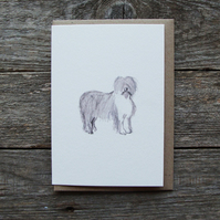Old English Sheep Dog Card