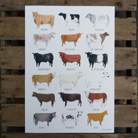 Cattle Breeds Print