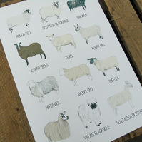 Sheep Breeds Print