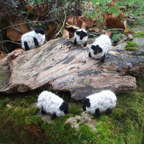 Ally's Swaledales