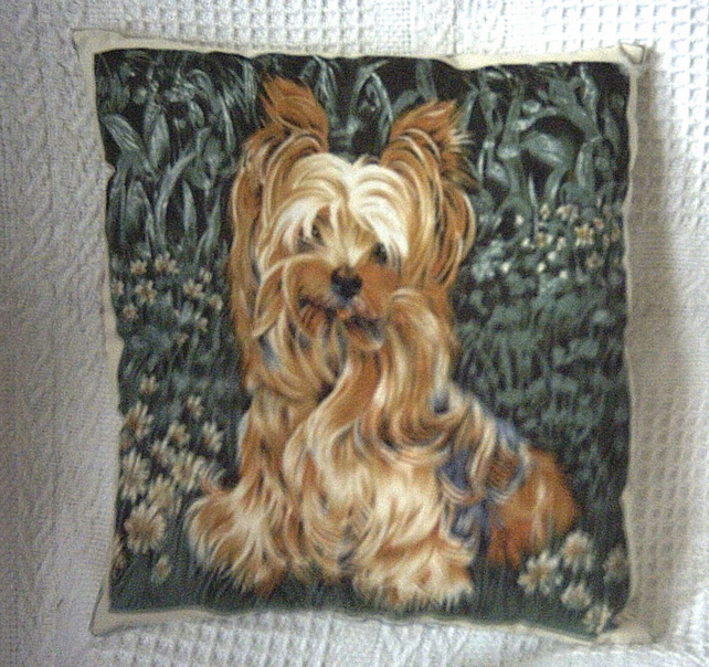 A lively young Yorkshire Terrier  waiting for some fun cushion