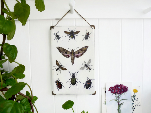 Hanging Vinyl Wall Art, Antique Insect Lithograph