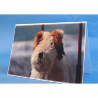 Hamilton the Dog on Wheels Toy Greeting Card