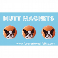 Boston Terrier Magnets