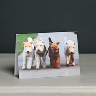 Four Terriers Greeting Card