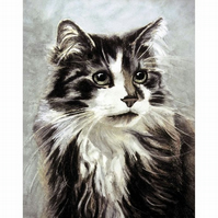 Cats 5 Different Greetings Cards -  from Original Watercolors
