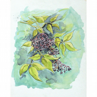 Elderberries - Original Watercolour Painting 14.25 x 11 Inches