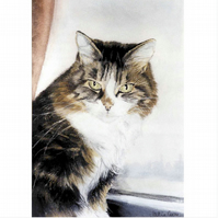 Cats 5 Different Greetings Cards - from Original Watercolours