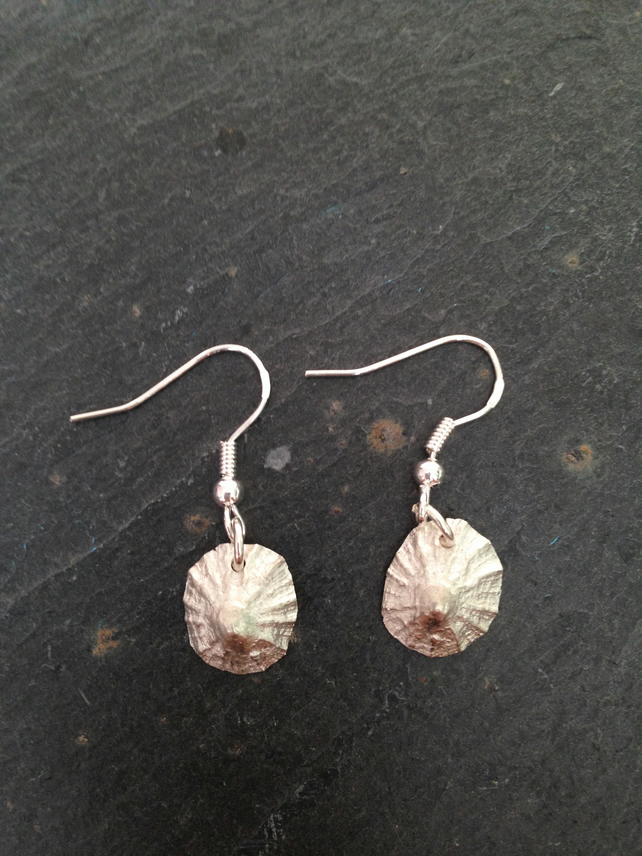 Limpet Sea shell silver earrings
