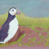 Puffin. Quality print from a coloured pencil drawing