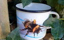 Insect ceramic camping mugs