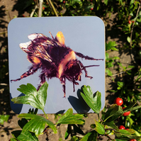 Bee drinks coaster . Love bees . Insect illustration . Bee lover gift
