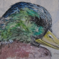 Mallard Duck mixed media artwork