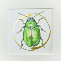 Illuminated giclee print of a shiny, green, dock beetle with gold leaf.